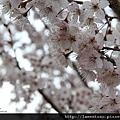2011_wulin_II_0185.JPG