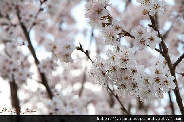 2011_wulin_II_0188.JPG