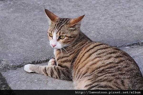 cat_village_0017.JPG