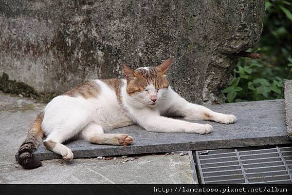 cat_village_0024.JPG