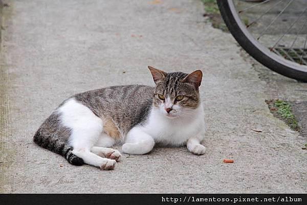 cat_village_0027.JPG