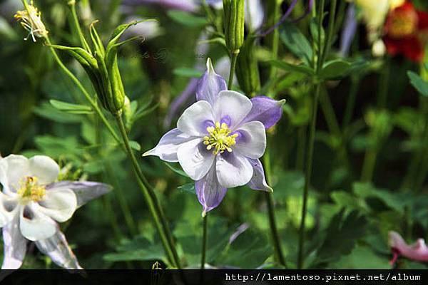 Flower_test_0003.JPG