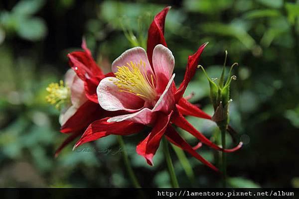 Flower_test_0004.JPG