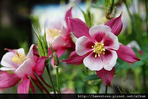 Flower_test_0005.JPG