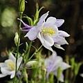 Flower_test_0006.JPG