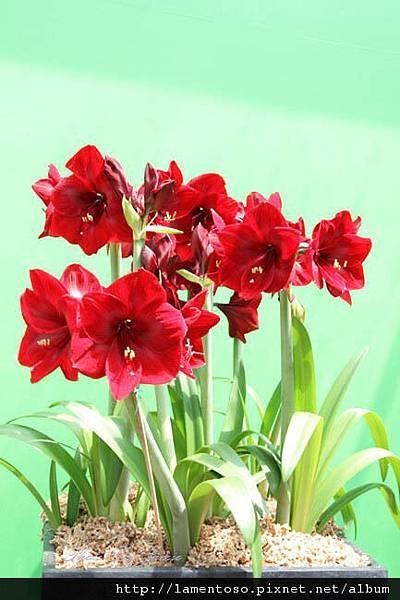 Flower_test_0009.JPG