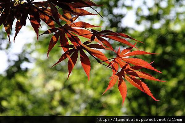 Flower_test_0011.JPG
