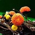 chrysanthemum_show134.JPG