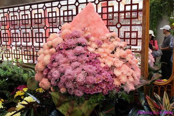 chrysanthemum_show147.JPG