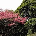 09_Sakura_I_0021.JPG