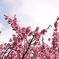 09_Sakura_I_0023.JPG