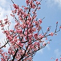 09_Sakura_I_0032.JPG