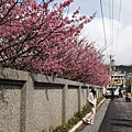 09_Sakura_I_0036.JPG