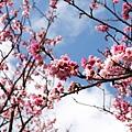 09_Sakura_I_0038.JPG