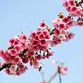 09_Sakura_I_0045.JPG
