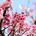 09_Sakura_I_0047.JPG