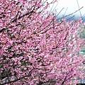09_Sakura_I_0054.JPG