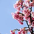 09_Sakura_I_0058.JPG