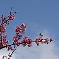 09_Sakura_I_0059.JPG