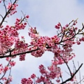 09_Sakura_I_0061.JPG
