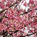 09_Sakura_I_0065.JPG