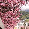 09_Sakura_I_0070.JPG