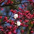 09_Sakura_I_0122.JPG