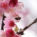 09_Sakura_I_0080.JPG