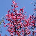 09_Sakura_I_0089.JPG
