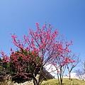 09_Sakura_I_0091.JPG