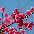 09_Sakura_I_0100.JPG