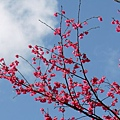 09_Sakura_I_0105.JPG