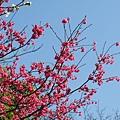 09_Sakura_I_0116.JPG