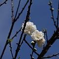09_Sakura_I_0120.JPG