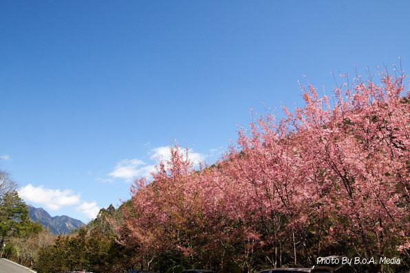 Shi_Ba_Sakura_0016.JPG