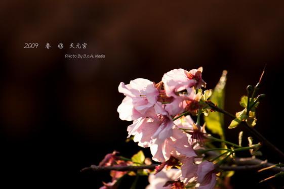 Tai_Yan_0050.JPG