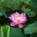 09_lotus_city0008.JPG