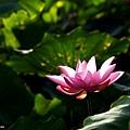 09_lotus_city0016.JPG