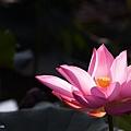 09_lotus_city0023.JPG