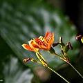 09_lotus_city0031.JPG