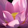 09_lotus_city0037.JPG