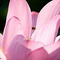 09_lotus_city0046.JPG