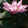 09_lotus_city0053.JPG