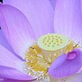09_lotus_city0064.JPG