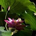 09_lotus_city0088.JPG