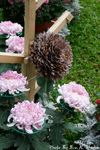 09_chrysanthemum_0100.JPG
