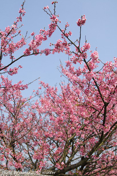 2010_Sakura_0004.JPG