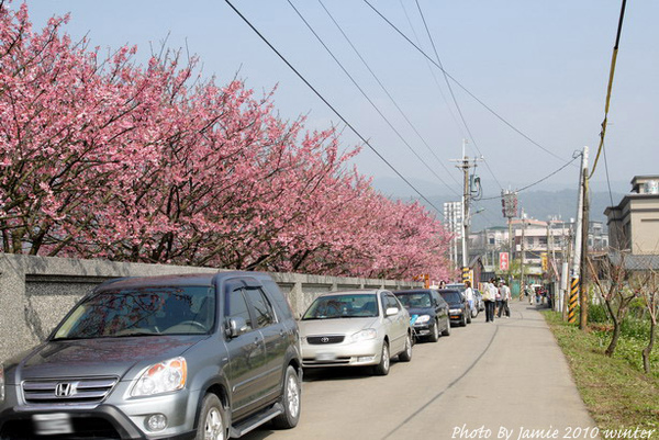 2010_Sakura_0009.JPG