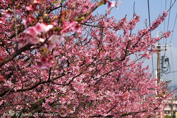 2010_Sakura_0031.JPG