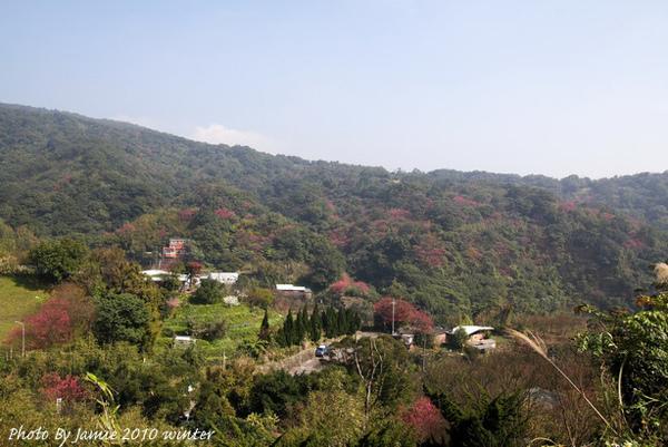 2010_Sakura_0033.JPG